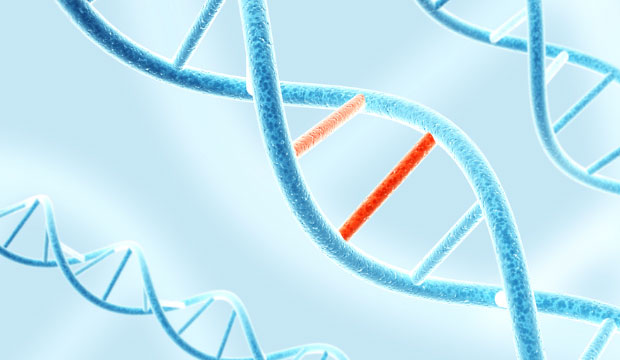 ADN et mutations génétiques chez l'humain
