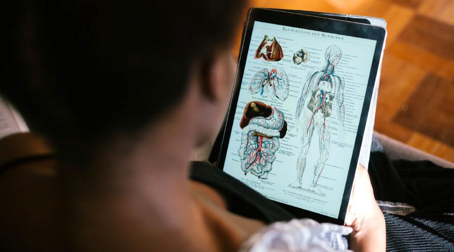 Les principaux organes du corps humain